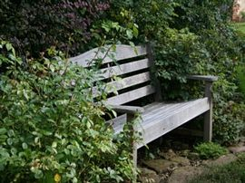 Bench in the roses
